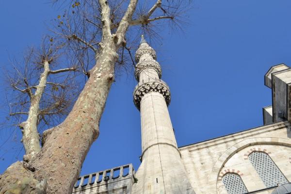 Деревья дополняют красоту святыни